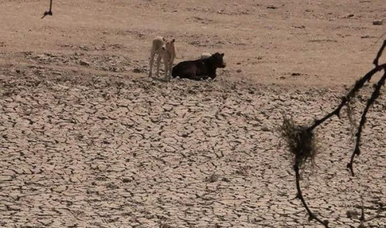 Persiste sequía en todo el estado