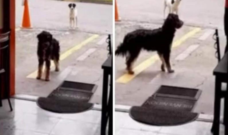 Perro callejero lleva su amigo a restaurante donde les dan comida